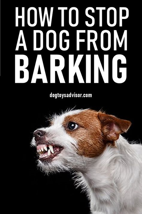 Train Your Dog To Stop Barking In 3 Easy Steps These Simple Tips Will Help Stop Excessive Barking And Teach Your Dog Training Dogs Dog Training Tips