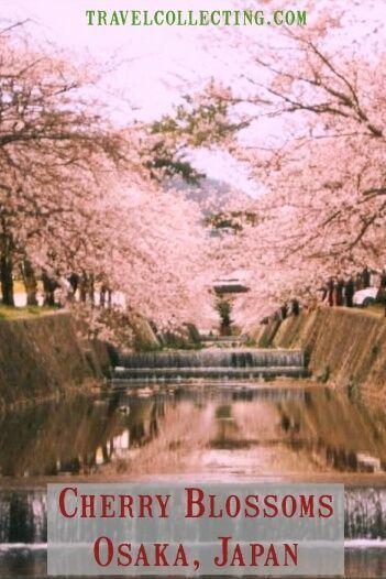 Best Osaka Cherry Blossom Viewing 2021 Hanami Osaka Cherry Blossom