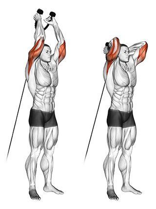 Image result for cable overhead triceps extension
