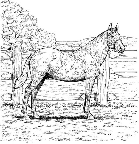 Malvorlagen Appaloosa Pferd Mit Leopardenmantel Ausmalbilder Appaloosa Ausmalbilder Leopardenmantel Malvorlagen Appaloosa Pferde Appaloosa Ausmalbilder