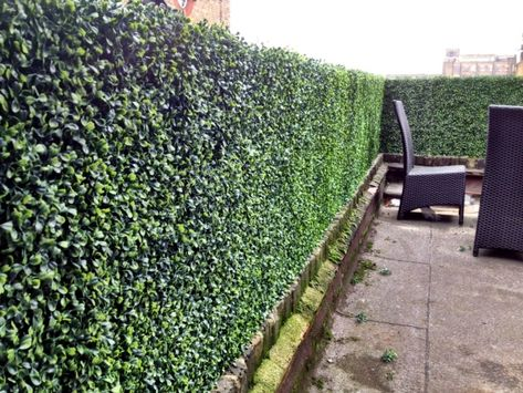 Wie Erreichen Sie Die Gewunschte Sichtschutz Hecke Im Garten