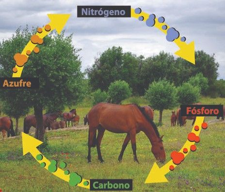 11 Ideas De Ciclos Biogeoquimicos Ciclo Del Carbono Ciclo Del Nitrógeno Fotosintesis
