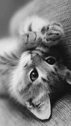 Cute little kitty #kitty #kitten #blackandwhite #adorable