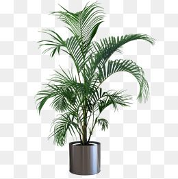 Indoor Plant Potted Plants Png Free Download Plant Clipart