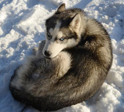 Why Do Dogs Curl Up In A Ball To Sleep Dogs Sick Dog Dog Exercise