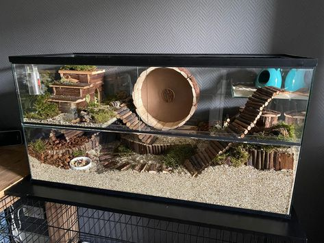 Hamster Life, Hamster Habitat, Baby Hamster, Hamster House, Dwarf Hamster Cages, Cool Hamster Cages, Gerbil Cages, Diy Guinea Pig Cage, Mouse Cage