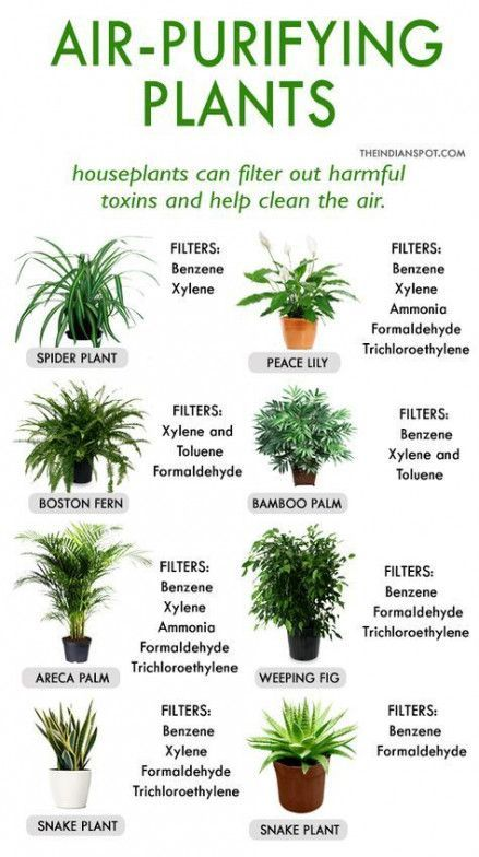 Air Purifying Plants In 2020 Plants House Plants Indoor Inside Plants