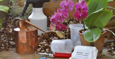 L Astuce Geniale Pour Sauver Une Plante En Mauvais Etat Bon A