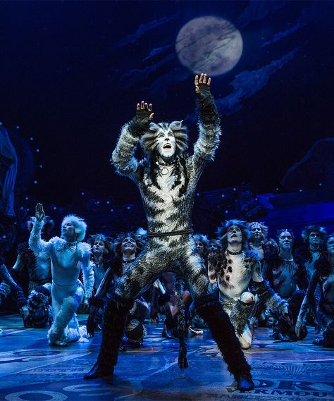 1806 best u2022Jellicle songs for Jellicle Catsu2022 images on Pinterest - best of lyrics invitation to the jellicle ball