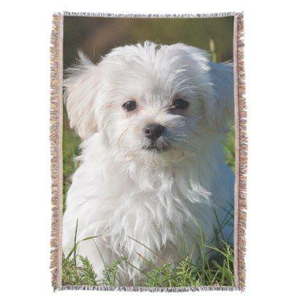 Maltese Puppy Throw Blanket Zazzle Com Maltese Puppy Puppies Dog Wedding
