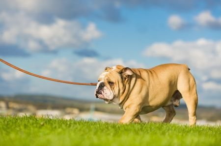Why Walking Your Dog Doesn T Count As Exercise No Matter How
