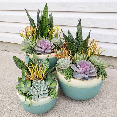5 Best Outdoor Succulents-Improve Your Garden Scenery Now – Garden İdeas Succulent Outdoor, Succulent Bowls, Succulent Gardening, Succulent Arrangements, Outdoor Plants, Cacti And Succulents, Planting Succulents, Container Gardening, Cacti Garden