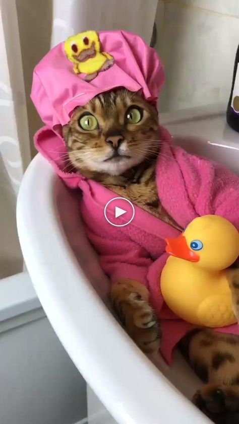 😆 Chilling time at the Bath Tub #funnycats #funnycatvideos #funnycatgifs