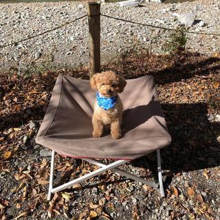 スノーピークのドッグコットを徹底レビュー ペットも快適に過ごせるキャンプグッズ ベビーカー キャンプ キャンプグッズ