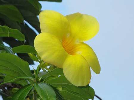 Flor Amarela Nomes Significados Fotos De Flores Amarelas