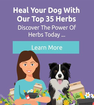 Is Your Dog S Itchy Skin Caused By Parasites Why Is My Dog