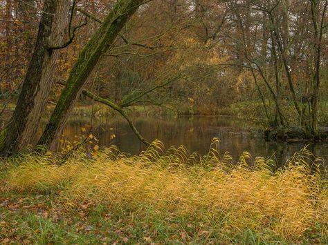 flickr Herfstkleuren langs het water....