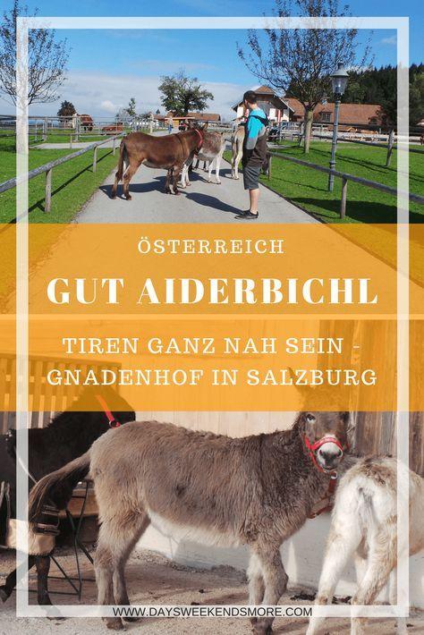 Gut Aiderbichl In Salzburg Ein Tierisches Ausflugsziel