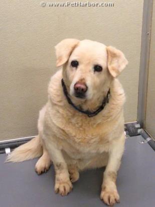 Adopt Deeta On Petfinder Dogs Pet Care Tips Pet Adoption
