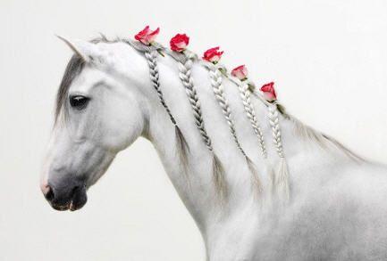 تفسير رؤية الحصان الابيض في المنام Horses White Horse Horse Pictures