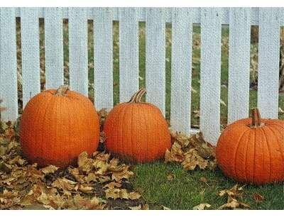 East Urban Home Pumpkins Cotton Orange Area Rug Wayfair In 2020 Orange Area Rug Cheap Halloween Decorations Thanksgiving Decorations