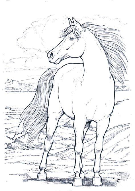 pin von vera starck auf ausmalbilder  ausmalbilder pferde