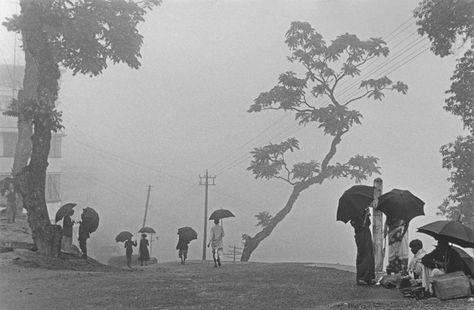 霧のダージリン 1956年