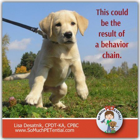 If You Are Having A Problem With Your Dog Pulling On The Leash