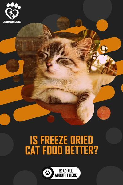 Is Freeze Dried Cat Food Better Detailed Answer In 2020 Dry Cat Food Best Cat Food Natural Cat Food