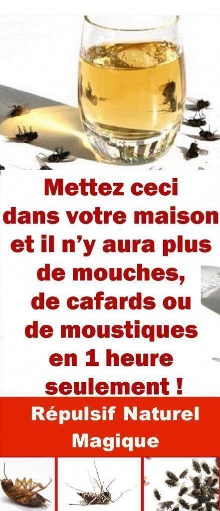 Comment éloigner Les Mouches à L'extérieur : comment, éloigner, mouches, l'extérieur, Idées, Mouche, Mouches,, Mouche,, Contre, Mouches