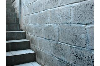 How To Clean Mold Off Basement Concrete Walls Home