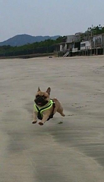 I M Flying Theerak The French Bulldog Mit Bildern
