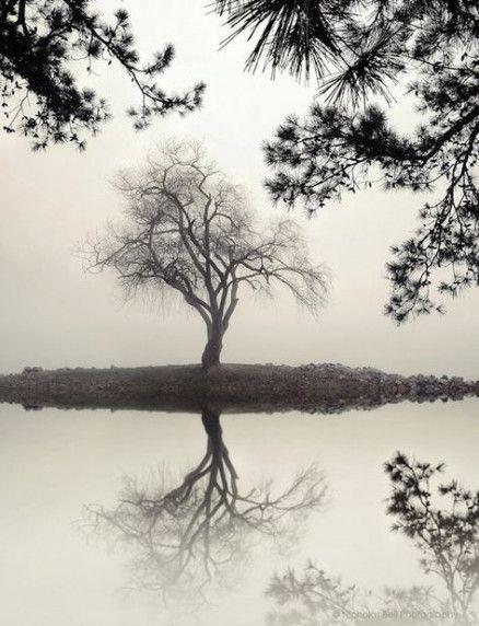 Best Vintage Landscape Photography Nature Trees Ideas With Images Nature Photography Trees Landscape Photography Nature Vintage Landscape