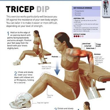 Tricep Dip Exercise Workout Programs Bodyweight Workout