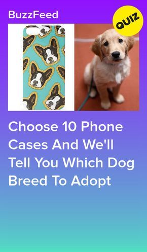 Choose Some Phone Cases And We Will Give You A Dog Breed To Get With Images Interesting Quizzes Quizzes For Fun Dog Quiz