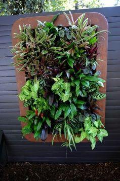 "Vertical garden or ""greenwalls"""