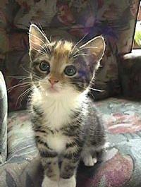 Katten Weren Uit De Tuin Vreedzame Methodes Op Een Rijtje