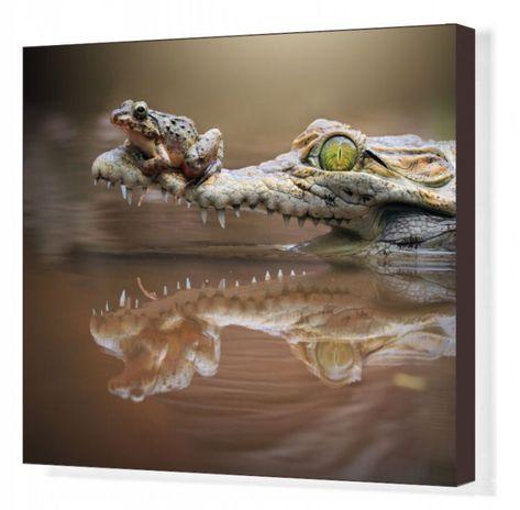 Box Canvas Print. Frog sitting on a crocodile snout, riau