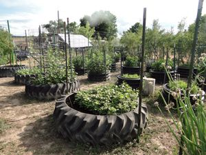 Use Old Tires, Culverts To Grow Vegetables - The Benefits Of Raised-Bed Gardening In Tires And Culverts
