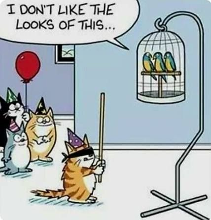 Humor tuesday hilarious kids 52+ Ideas #humor | Cat jokes, Funny cartoons,  Cat birthday