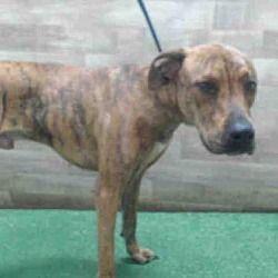 Orlando Fl Greyhound Meet Jax A Dog For Adoption Pets