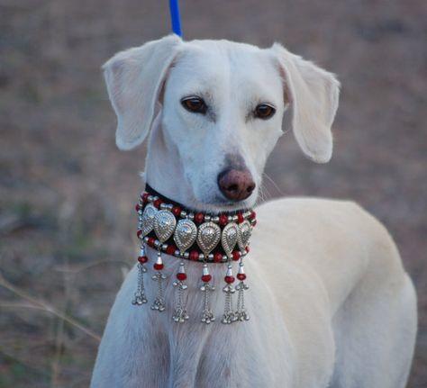 Whippet Collar Iggy Collar,Saluki Collar 38mm-50mm Yellow Martingale with Hearts Dog  Collar Large Breed Collar Greyhound Collar