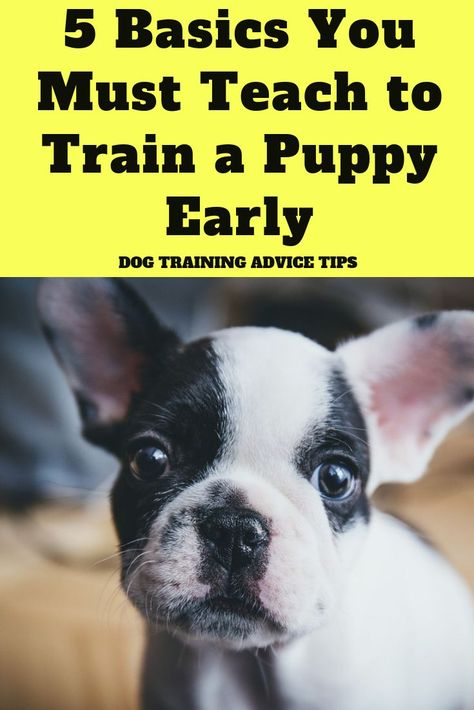 5 Basics You Must Teach To Train A Puppy Early Dog Training