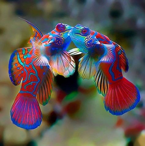 We give part of the sales to wildlife conservation projects. Underwater Creatures, Ocean Creatures, Underwater World, Cool Sea Creatures, Beautiful Sea Creatures, Animals Beautiful, Colorful Fish, Tropical Fish, Poisson Mandarin
