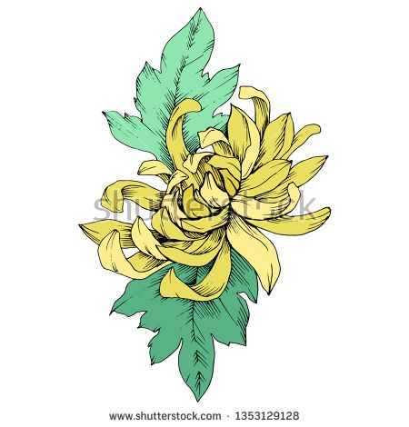 Stock Vector Vector Yellow Chrysanthemum Floral Botanical Flowers Wild Spring Leaf Wildflower Isolated Engraved Ink Art Isolated Flower Illu Botanical Flowers Yellow Chrysanthemum Chrysanthemum
