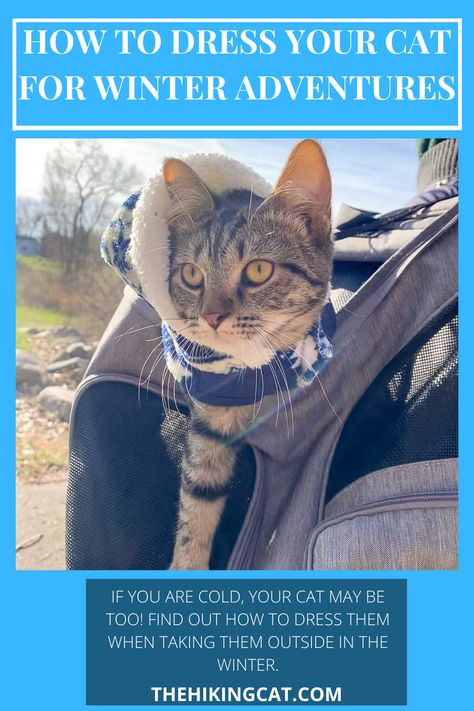 30 The Hiking Cat Blog Ideas In 2021 Adventure Cat Cats Pet Owners