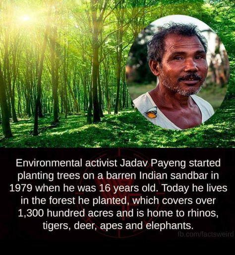 The man who planted an entire forest by himself. 11 Jadav Molai Payeng Ideas Forest Environmental Activist Forest Reserves