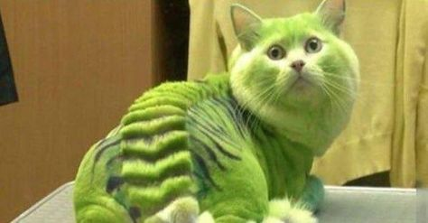Cats Who Are Not Happy with Their New Hair Styles