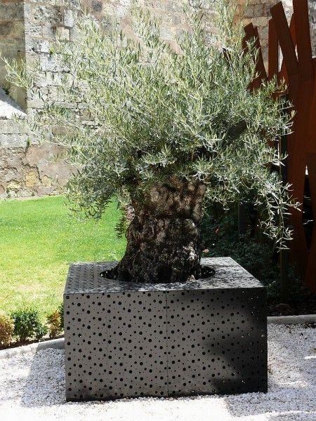 Tolle Mediterrane Garten Anlegen Gestaltungstipps Fur Sudliche Garten Mein Mediterraner Garten Olivenbaum Mediterraner Garten Pflanzen