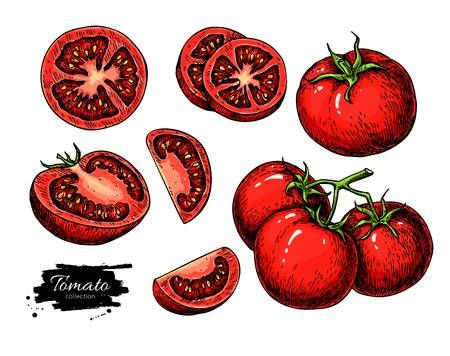 Tomate De Dibujo Vectorial Conjunto Aislado De Tomate Verduras En Rodajas Pieza En La Ramificacion Dibujo Vectorial Tomates Dibujo Titulos Para Cuadernos